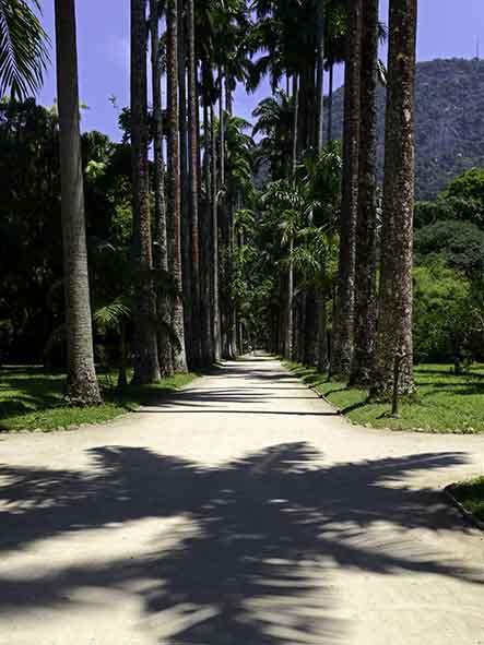 Aleia das palmeiras e sombra_AnaGiglio_web