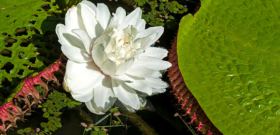 Plantas aquáticas no Jardim Botânico