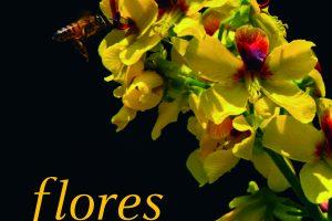 flores_capa1